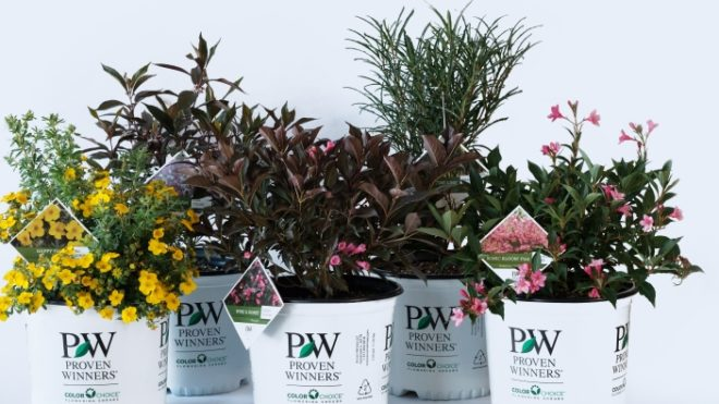 Proven Winners Shrubs