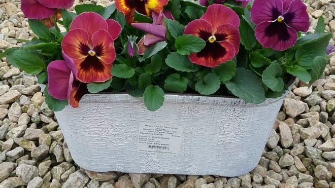 "12"" Decorative Planter Pansy Delta Persian Medley"