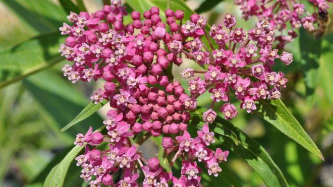 April is Native Plant Month