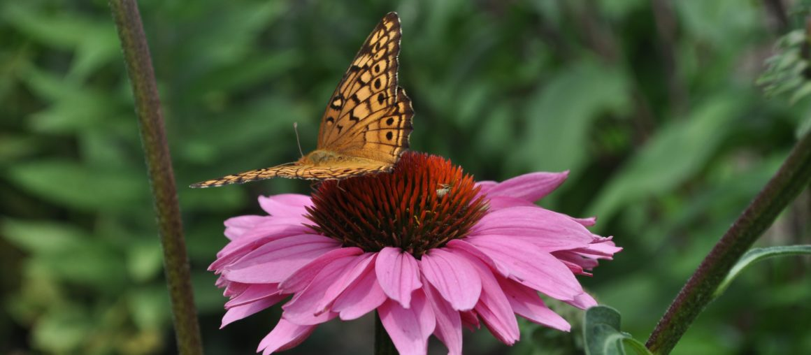 National Pollinator Week is June 22-28, 2020
