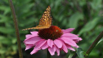 National Pollinator Week is June 22-28, 2020